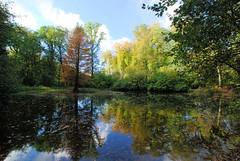 Fotos aus dem Niendorfer Gehege - Naherholungsgebiet im Hamburger Stadtteil Niendort, Bezirk Eimsbüttel; Teich mit Herbstbäumen.