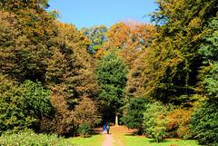 Fotos aus dem Niendorfer Gehege - Naherholungsgebiet im Hamburger Stadtteil Niendort, Bezirk Eimsbüttel. Hohe herbstlich gefärbte Bäume bei der großen Wiese / Hundeauslaufplatz.