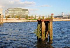 Alte Holzdalben mit Wildkraut und jungen Bäumen bewachsen; Blick über den Grasbrookhafen zu der Marco Polo Terrasse in der Hamburger Hafencity.