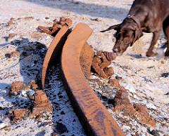 Rostige, verbotene Schiene eines Hafenkrans beim Strandkai in der Hamburger Hafencity - ein Hund schnüffelt an dem verdächtigen Teil.