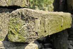 Fotos von der Billwerder Bucht, ursprünglicher Verlauf der Hamburger Norderelbe bis 1879. Detail der Holzkonstruktion der historischen Wassertreppe 51 am Moorfleeter Deich in Hamburg Moorfleet. Der bewegliche Niedergang ermöglichte es bei den unte