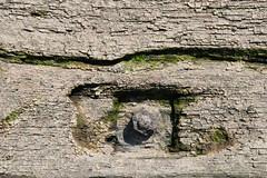 Fotos von der Billwerder Bucht, ursprünglicher Verlauf der Hamburger Norderelbe bis 1879. Detail der Holzkonstrukiton der historischen Wassertreppe 51 am Moorfleeter Deich in Hamburg Moorfleet. Der bewegliche Niedergang ermöglichte es bei den untersc