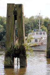 Alter Holzdalben mit Grünpflanzen und blühenden Gräsern bewachsen - Moldauhafen in Hamburg Kleiner Grasbrook.