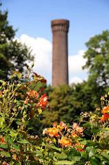 Blick über die Rosen im Traunspark zum Turm der Wasserkunst in Rothenburgsort. Der kleine Park hinter dem Deich der Billwerder Bucht wurde 1923 von Otto Linne angelegt.
