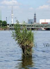 Reste einer alten Holzdalbe / Anlegepfahl - die Spitze ist mit Gras und Wildkraut bewachsen - Reiherstieg im Hambuger Hafen .