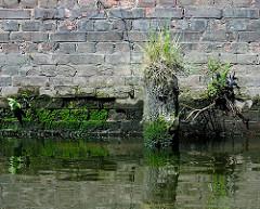 Reste eines Holzdalbens mit Gras  bewachsen - Kaimauer mit Moos und Gräsern bedeckt; Relikte / Überbleibsel vom alten Hamburger Hafen.