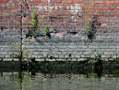 Alte Kaimauer / Ziegelmauer im Hamburger Hafen - blühendes Wildkraut, Unkraut wächst in den Fugen der Mauer.