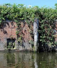 Reste eines Holzdalbens / Streichdalben; im verwitterten Holz wächst Gras - das Ufer ist mit Gebüsch bedeckt;  Relikte / Überbleibsel vom alten Hamburger Hafen.