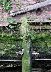 Alter Holzdalben im Hamburger Hafen - bemoost und mit Gras bewachsen; unter der Wasserlinie ist die Kaimauer mit Algen und Moos bewachsen - Wildkraut wächst am Kai und in den Mauerritzen