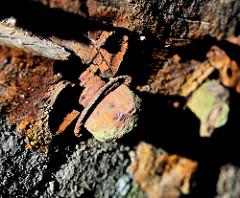 Verwittertes Holz, rostiger Kopf einer Eisenschraube - Steganlage im Hafen;  historische Hafenrelikte - Zeugnis der Vergangenheit.