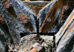 Verwittertes Holz, rostige Nägel / Schraube - Steganlage im Hafen;  historische Hafenrelikte - Zeugnis der Vergangenheit.