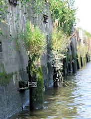 Vermoderte Holzpfähle / Holzdalben im Hamburger Hafen - Zeugnis der Hafengeschichte, dicht mit Gras bewachsen.