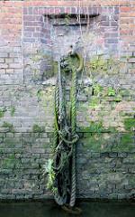 Altes bemoostes Tau / Leine an einem Eisenring - Ziegelmauer / Kaimauer mit Moos bewachsen im Hamburger Hafen.