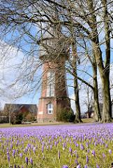 Schlosspark Husum mit blühenden Krokussen auf der Wiese - im Hintergrund der Husumer Wasserturm.