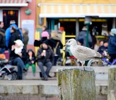 Möwe auf einer Holzdalbe im Husumer Binnenhafen - im Hintergrund eine Eisdiele an der Hafenpromenade - eisessende Touristen.