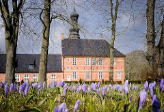 Krokusblüte beim Husumer Schloss - Lilafarbene Krokusse, im Hintergrund das Husumer Schloss.