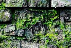 Alte Ziegelmauer / Kaimauer im Hamburger Hafen - mit Moos und Algen bewachsen.