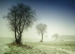 Bäume am Feld - Schneefall; Feldweg - Schnee auf dem Gras - Perspektive / Hintergrund. Stimmung Einsamkeit - Kälte + Leere.