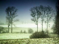 Bäume mit Misteln in den kahlen Ästen - Schneefall; Felder im Winter mit Schnee bedeckt - Einsamkeit, Winterstimmung.