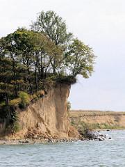 Abbruchbedrohte Steilküste bewachsen mit Bäumen - Greifswalder Bodden, Insel Rügen.