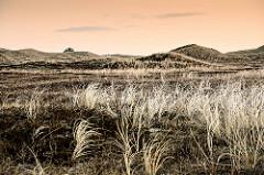 Morgenstimmung am Meer; Gras und Dünen - einsames Haus zwischen Dünenhügeln.