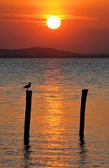 Sonnenuntergang über den Neusiedler See - rot steht die Sonne über den Bergen und spiegelt sich im Wasser - eine Möwe sitzt auf einem Holzpfahl.