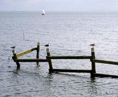 Möwen sitzen auf Holzpfählen - Segelschiff im Greifswalder Bodden vor Lauterbach / Rügen.