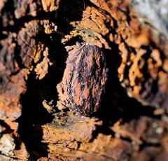 Rostiges Eisen / Nagel; Holzruderboot im Hafen von Lauterbach, Insel Rügen.