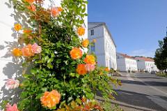 Rosenstrauch an der weissen Hauswand eines der klassizistischen Gebäude des Circus Putbus / Rügen.