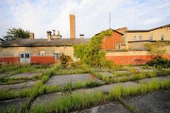 Stillgelegte Fischfabrik - Gras wuchert aus den Ritzen der Betonplatten - Bilder aus Lauterbach / Rügen.