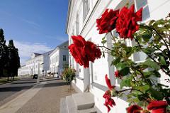 Rosenstrauch mit roten Rosen - klassizistische Architektur des Circus Putbus / Rügen.