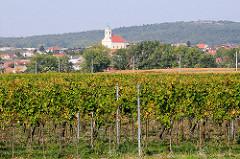 Weinanbaugebiet am Neusiedler See - Weinreben; Dorf im Hintergrund.