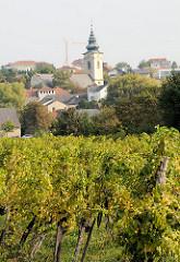 Weinreben / Weinanbaugebiet am Neusiedler See in Österreich; Dorf mit Kirche.