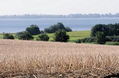 Abgeerntetes Getreidefeld - Greifswalder Bodden Insel Rügen bei Lauterbach.