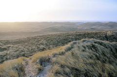 Dünen am Meer - wellige Dünen mit Gras bewachsen - im Hintergrund die Nordsee an der dänischen Küste.