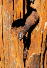 Rostiger Nagel im Holz - die alte Bohle ist vom Rost braun verfärbt. Fotografien aus Lauterbach / Rügen.
