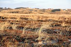 Graslandschaft - mit Gras bewachsene Dünenhügel - Ferienhäuser zwischen den Dünen.