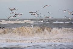 Möwen  am Strand - fliegen über den Wellen, Gischt.