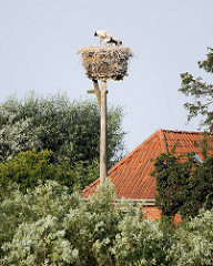 Storchennest auf Holzpfahl zwischen Bäumen am Ufer der Elbe.