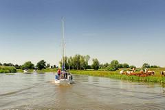 Ein Segelboot fährt mit dem Hilfsmotor auf der Krückau - am Ufer eine weidende Herde Kühe.