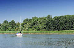 Schilfufer der Elbinsel Pagensand - die Insel steht unter Naturschutz - ein Segelboot ankert beim Ufer.
