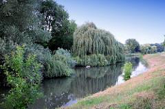 Weiden und Bäume am Ufer vom Fluss Leitha in Mosonmagyaróvár; Ungarn.