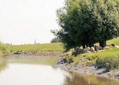 Am Ufer der Krückau haben Schafe Schutz vor der Mittagssonne unter einem Baum gesucht - im Hintergrund der Kirchturm von Elmshorn.