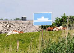 Hinweisschild auf eine Fähre am Ufer der Stör - Kühe liegen auf dem Deich in der Sonne.