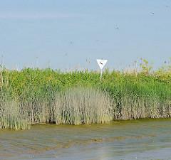 Ein dichter Schilfgürtel säumt das Ufer an der Einfahrt zum Dwarser Loch - ein verblichenes Schild Naturschutzgebiet steckt am Ufer.