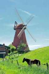 Galeriewindmühle am Deich in Beidenfleth an der Stör - ein Pferd steht im hohen Gras am Zaun.