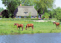Wiesen mit weidenden Pferden an der Wilsterau - Wohnhaus mit Reet gedeckt.