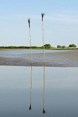 Backbordpricken stecken im Watt der Haseldorfer Binnenelbe - die Reisigbesen spiegeln sich im Niedrigwasser.