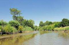 Lauf der Krückau - die Ufer sind mit Bäumen und Schilf dicht bewachsen.