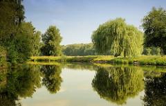 Hohe Weiden und Bäume spiegeln sich im Wasser der Elde Müritz Wasserstrasse.